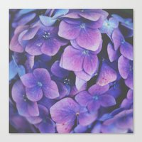hydrangea Canvas Prints featuring Hydrangea by Christine Hall