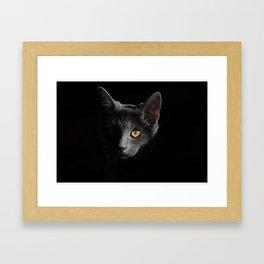 Cat, Cats (Popular Cat Print) Framed Art Print