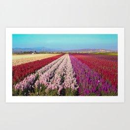 Flower Field Art Print