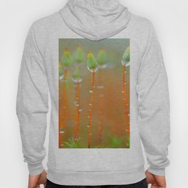 MOSS WITH WATER DROPS Hoody