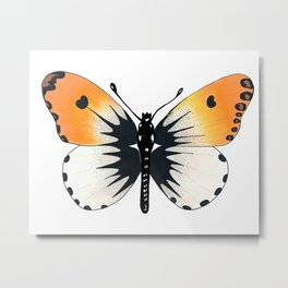 Butterfly with orange wings Metal Print