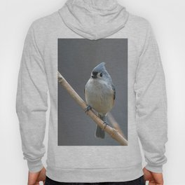 Tufted Titmouse 9639 Hoody