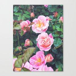 Sorbet Roses Canvas Print