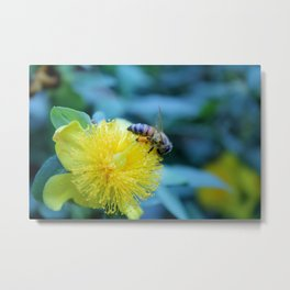 bumble bee doesn't flee Metal Print