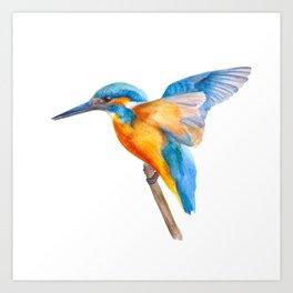Original Kingfisher Art Print