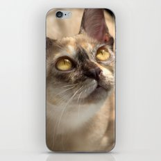 Study of a Cat iPhone & iPod Skin