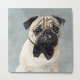 Mr Pug Metal Print