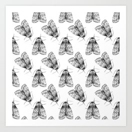 Moth Insect Pattern Pencil Drawing Art Print