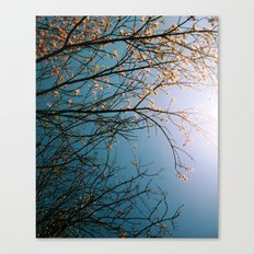 In Bloom (two) Canvas Print