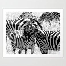 Zebras in Maasai Mara Art Print