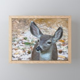 Deer Gazing Framed Mini Art Print