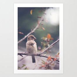 Little Fluff Ball Art Print