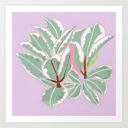 Rubber Tree Variegated Art Print
