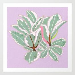 Rubber Tree Variegated Art Print