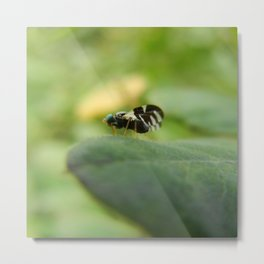 Unknown Mysterious Black Fly with Blue Eyes Ready to Take Off Metal Print