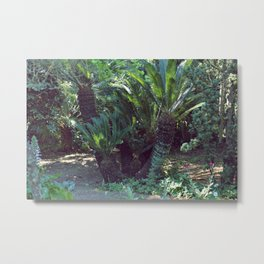 Vintage garden with exotic palm Metal Print