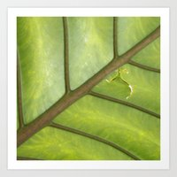 banana leaf Art Prints featuring Banana Leaf by FlightsofColor