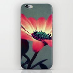 Look for your middle iPhone & iPod Skin