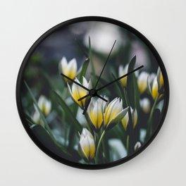 Yellow White Tulips Wall Clock