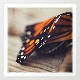 Monarch Study #2 Art Print