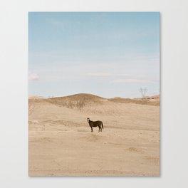 wild horses 1 Canvas Print