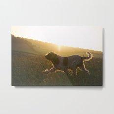 Brown Roan Italian Spinone Dog Metal Print