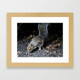 Squirrel Forage Framed Art Print