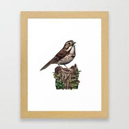 Song Sparrow Framed Art Print