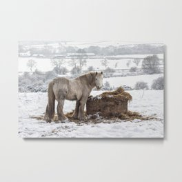 Horse in the snow on a cold winter's day Metal Print