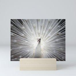 The white peacock Mini Art Print