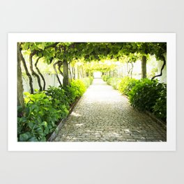 grapes and vines Art Print