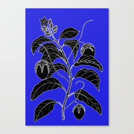 Western Nightshade (also know as Bush Tomato ) - Solanum chippendolei or Solanum coactilferum Canvas Print