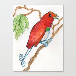 Bird of Paradise 3 Canvas Print