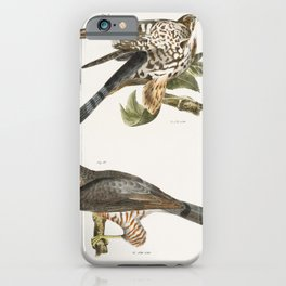 9 The Pigeon Hawk (Falco columbarius) 10 Coopers Hawk (Astur cooperi)  from Zoology of New York (184 iPhone Case