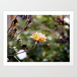 Beauty in the Thorn Art Print