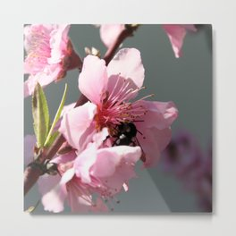 Unidentified Winged Insect On Peach Tree Blossom Metal Print