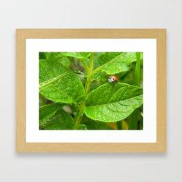 Lady Bug Framed Art Print