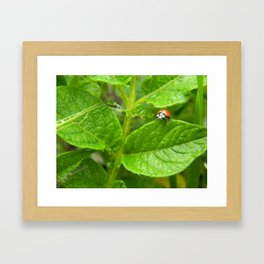 Lady Bug Framed Art Print