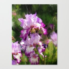 White and Burgundy Surprise Canvas Print