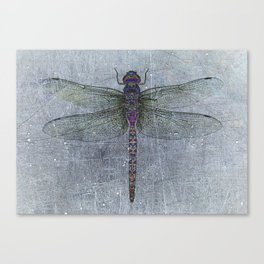 Dragonfly on blue stone and metal background Canvas Print