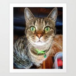 Green Eyed Meow Art Print