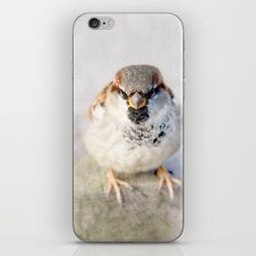 Don't Mess With Sparrows iPhone & iPod Skin