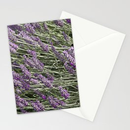 """LAVANDULA """"FRED BOUTIN"""" Stationery Cards"""