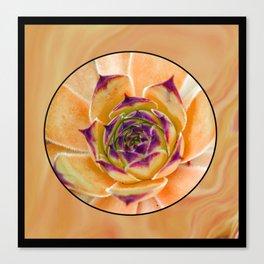 Succulente Canvas Print