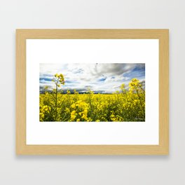 Fields of yellow - Floral Photography #Society6 Framed Art Print