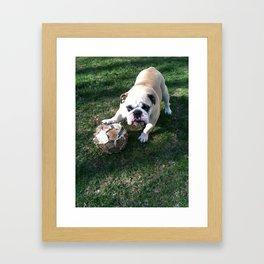 Bulldog Playing Soccer Framed Art Print