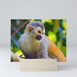 Squirrel monkey - Costa Rica Mini Art Print