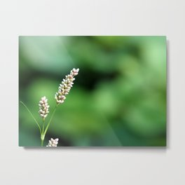 Common Grass Buds Metal Print