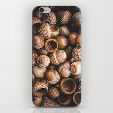 Squirrel Harvest iPhone & iPod Skin