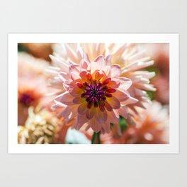 Dahlia / In The Garden / 6 Art Print